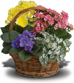 Spring Has Sprung Mixed Basket
